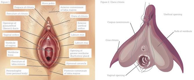 prp in vagina